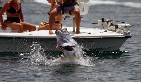 Tarpon Fishing on Sanibel Island